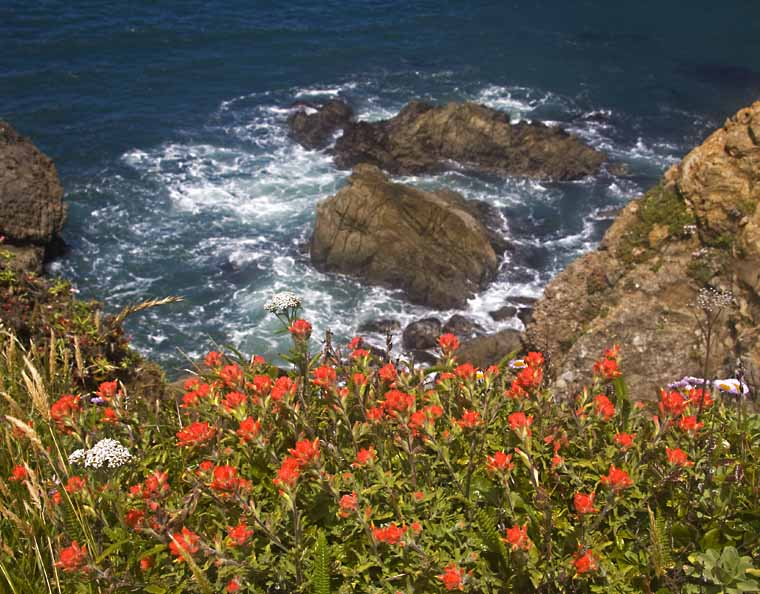 Red wildflowers with ocean in background